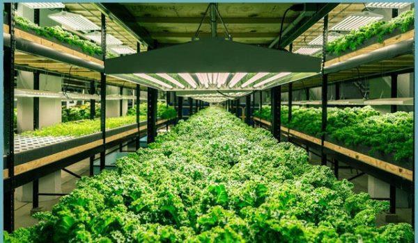 Бизнес на выращивании зелени: выгодно или нет