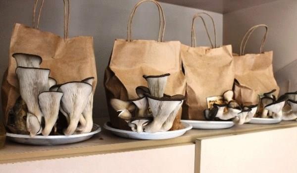 Выращивание грибов в домашних условиях как бизнес
