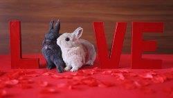 Кролиководство как бизнес: с чего начать и как преуспеть