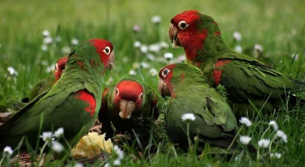 Особенности бизнеса по разведению попугаев
