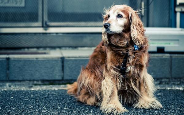 Сколько можно заработать на разведении собак